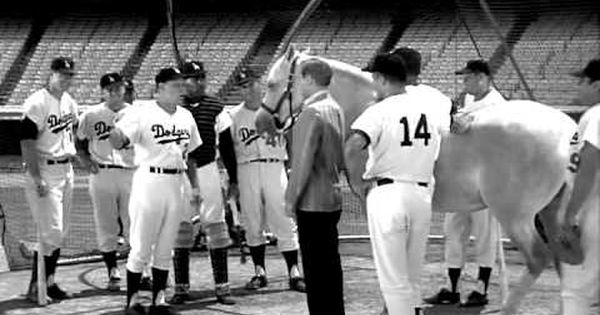 Did You Know Mr Ed Tried Out For The Dodgers Mister Ed Play Baseball Comedy Tv