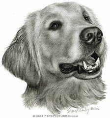 Dog Treats Howl O Ween Tricking Treats Golden Retriever Art Dog Drawing Golden Retriever Drawing