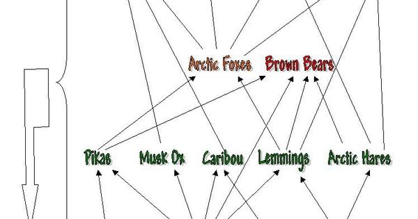 arctic tundra ecosystem food web diagram