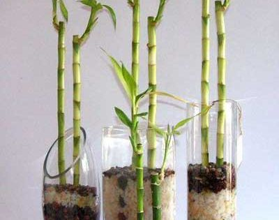 C mo decorar una casa para tener buena suerte bamb de - Como tener buena suerte ...
