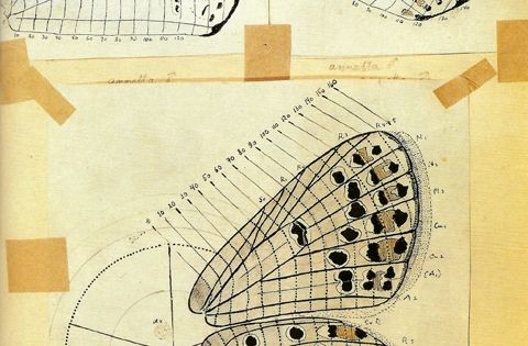 Nabokov's system developed to map patterns on butterfly wings. / Sacred Geometry