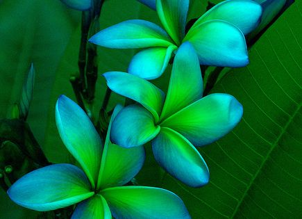 blue green flowers