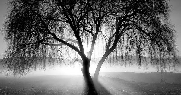 black and white. photograph. light and darkness. sunlight. shadow. tree.
