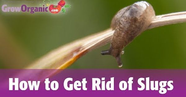 4 Ways To Get Rid Of Garden Slugs Wikihow Yard
