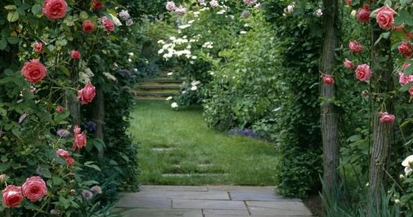 Types of fragrant climbing plants gardens flowers and walkways - Climbing plants that produce fragrant flowers ...