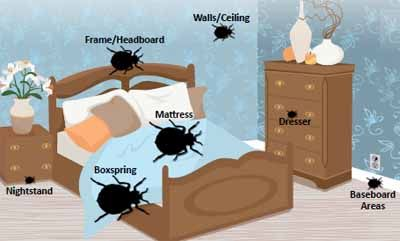 Home Remedies For Getting Rid Of Bed Bugs Rid Of Bed Bugs Bed