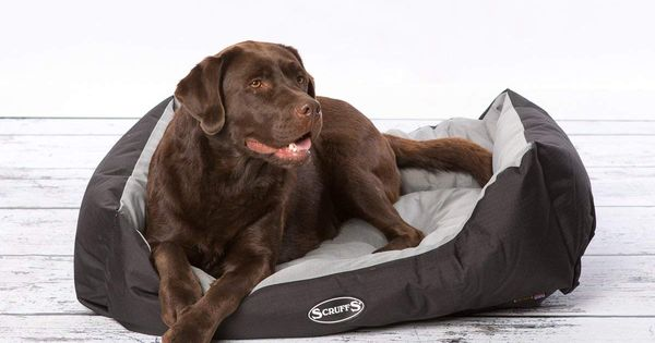 Scruffs Expedition Water Resistant Box Bed For Pets To View Further For This Item Visit The Image Link This Is An Affil Cat Bed Furniture Cat Bed Box Bed