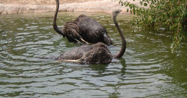 At The Maryland Zoo Zoo Animals Bird