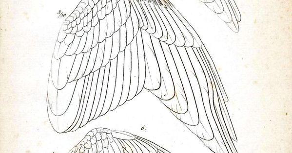 Animal - Bird - Educational plate - Bird wings 2