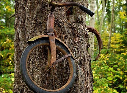 Photo credit Todd Bates Tree that grew around an old bike