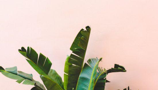 leaf photography_my blue flamingo