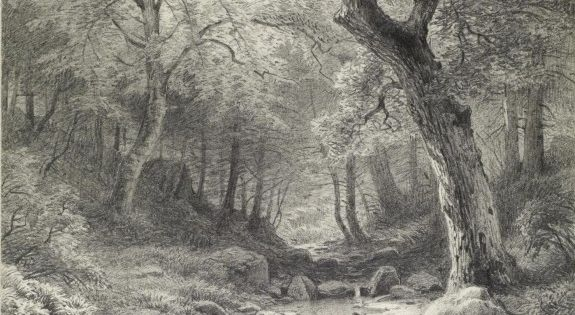 Forest scene artist paul weber early 1900 39 s pencil on for Forest scene drawing