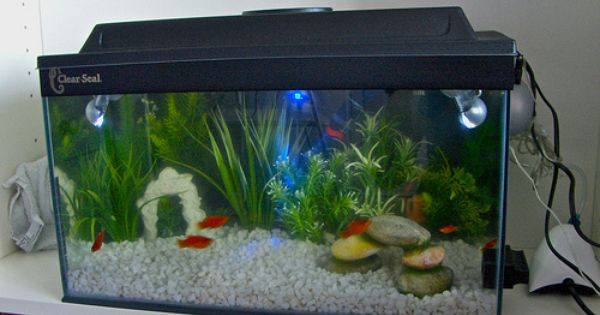 Cheap fish tank 500 294 fish tanks for Aquarium decoration ideas cheap