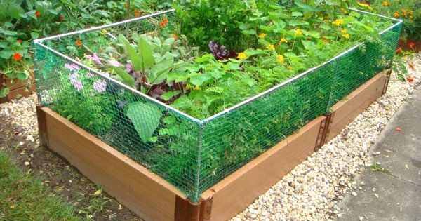 Raised Bed Vegetable Garden Layout | above the raised garden bed rabbit