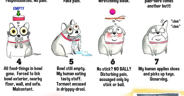 humans have a universal pain scale chart  i think dogs