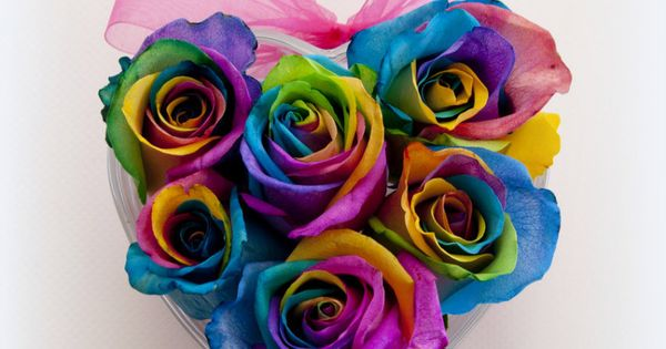 Rainbow roses home buy rainbow roses rainbow rose buds for Where to buy rainbow roses