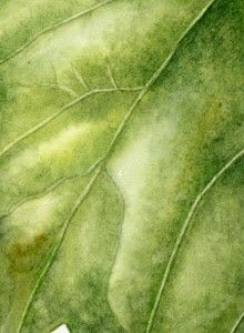 Watercolor Tutorial Botanical Art Painting Leaf Veins