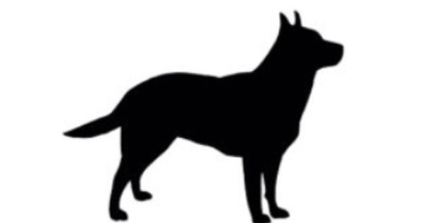Cattle Dog Silhouette With Images Sleepy Dogs Dog Silhouette