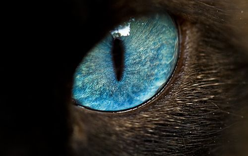 aqua blue cat eye