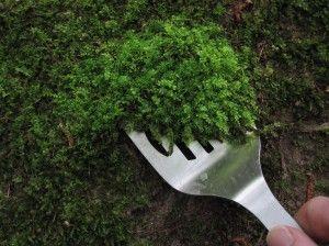 Dry Moss Micro Landscape Moss Garden Green Fairy Bonsai Lawn Mossy Lichen Decor