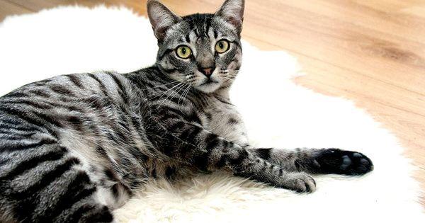 odeur liti re chat voici des trucs pour une liti re pour chat sans odeur chats accessoires. Black Bedroom Furniture Sets. Home Design Ideas