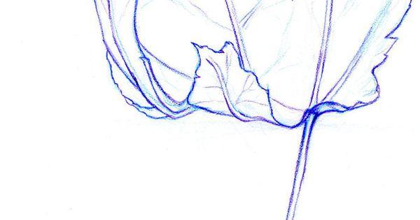 Contour Line Drawing Leaf : Contour line leaf by alexwhlr on deviantart drawing