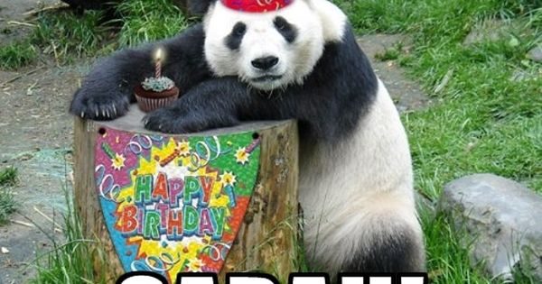 Happy Birthday Sarah Happy Birthday Panda Meme