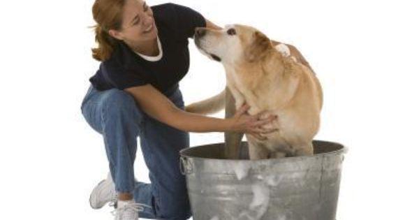 Dog Shampoo Recipe With Dawn And Vinegar Homemade Dog Shampoo