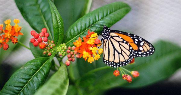 Botanischer Garten Augsburg Schmetterlinge Botanischer Garten Augsburg Botanischer Garten Garten