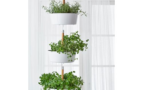 Bittergurka Hanging Planter White Gardens Potted
