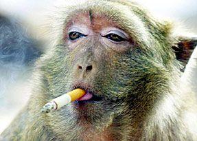 Monyet Lucu Gambar Lucu Lucu Monyet