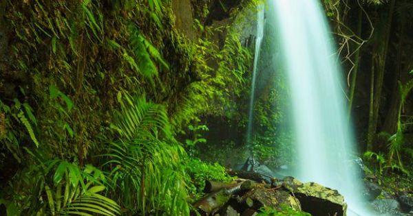 Curtis Falls in Tamborine Mountain, QLD letsgetlost @Australia ...