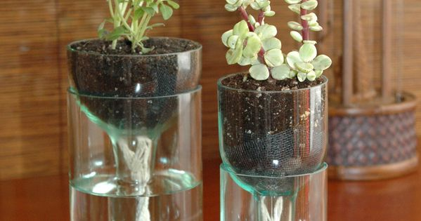 self watering planter made from recycled wine bottle. You will have to