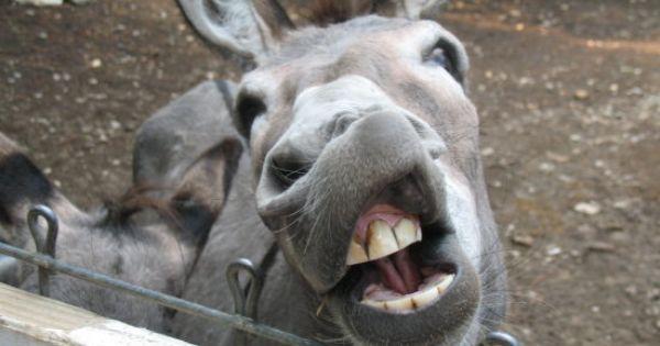 ugly donkeys pictures   janigross ugly donkey beads there ...  ugly donkeys pi...
