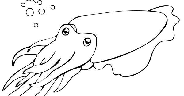 cuttlefish outline Cuttlefish