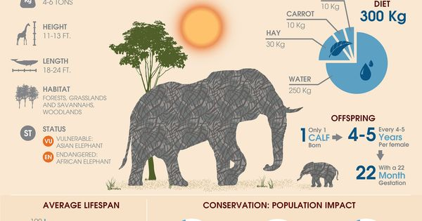 A WikiGraphic About Elephants From Behance | If youre new to the Elephant world and would like to get yourself up to speed on facts about elephants this Wiki-Infographic is a great starting point. Share it with your friends and help raise awareness about the worlds largest land mammal. This infographic by Stephanie Blackwell covers everything about elephants including regional habitat scientific classification dietary information reproduction statistics average lifespan population trends and co