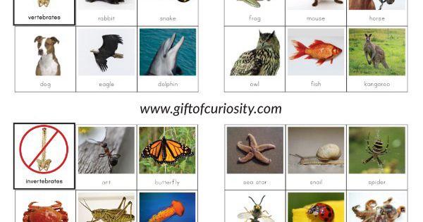 282882420323988892 on Vertebrates Vs Invertebrates Picture Sorting Cards Montessori Printables