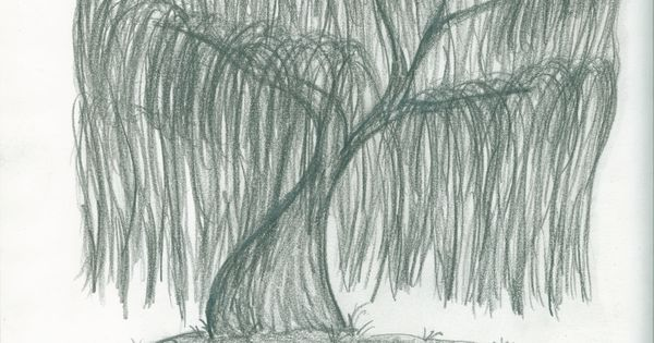 My Drawing Of A Weeping Willow Stuff Pinterest