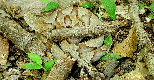 10 Awesome Examples of Animal Camouflage | Camouflage ... 10 Examples Of Reptiles