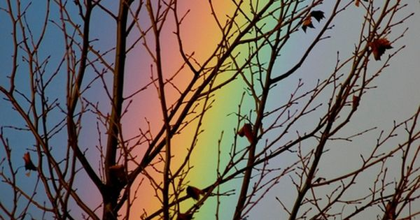 Rainbow through tree branches