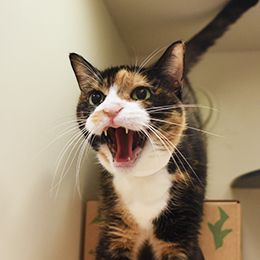 Common Cat Behavior Issues With Images Cat Behavior Facts Cat Behavior Cat Care