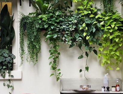 Vamos a intentar tener una pared verde d jardines for Pinterest jardines verticales