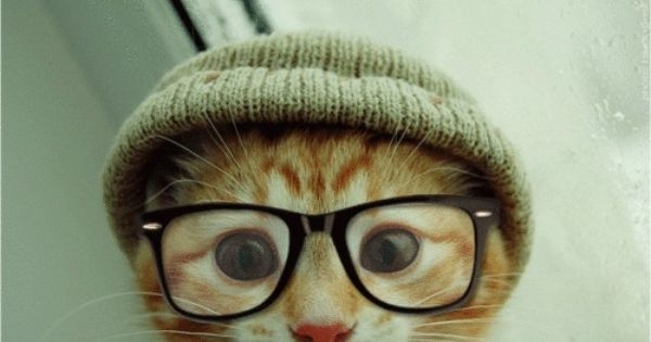 Hipster cat- When I'm hanging out in Brooklyn with all the cool