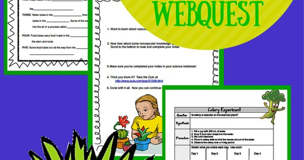 vascular vs  nonvascular plants webquest and celery