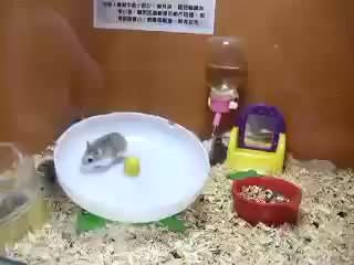 2 Hamsters 1 Wheel Hamster Wheel Best Funny Pictures Edgy Memes