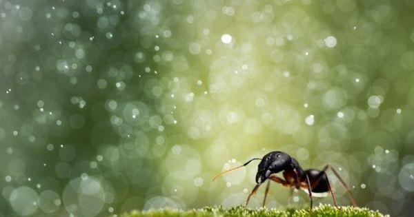 小さな虫たちの一瞬をとらえたディズニー映画のような美しすぎる写真7