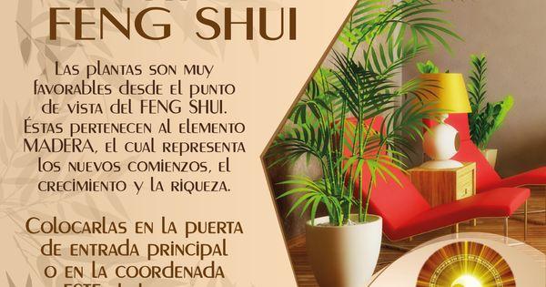 Tipfengshui no olvides colocar las plantas en la puerta for Plantas para la cocina segun feng shui