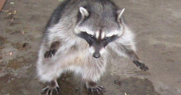 Contests Animals Wild Pet Cage Animals