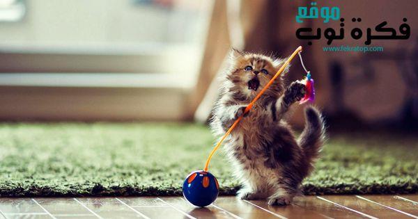 أجمل صور قطط مضحكة 2019 قطط حزينة روعة 2 Funny Cat Wallpaper Kittens Cutest Cats And Kittens