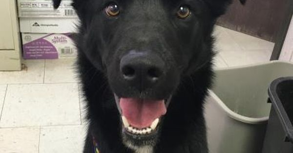Dogs To Adopt In Colorado Springs